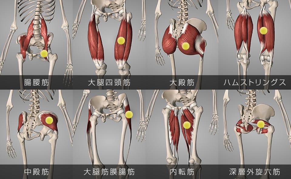 テニスボールでマッサージする股関節を動かしている8つの筋肉
