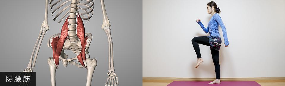 腸腰筋・脚や太ももを持ち上げる