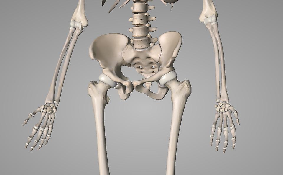 ストレッチをする前に股関節について理解する