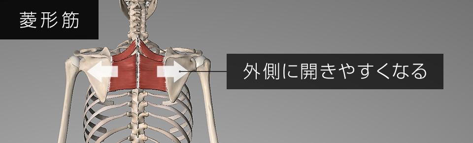 菱形筋が弱くなると肩甲骨が外側に開きやすくなる