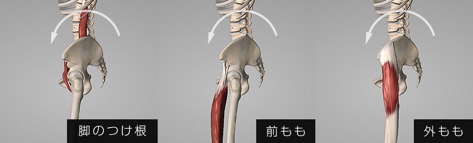 脚のつけ根・前もも・外ももの筋肉が硬くなると骨盤が前傾しやすくなる
