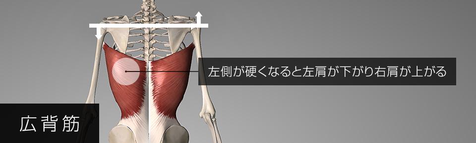 広背筋の左側が硬くなると左肩が下がり右肩が上がる