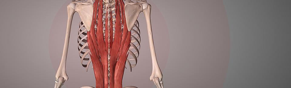脊柱起立筋のストレッチを行うメリット