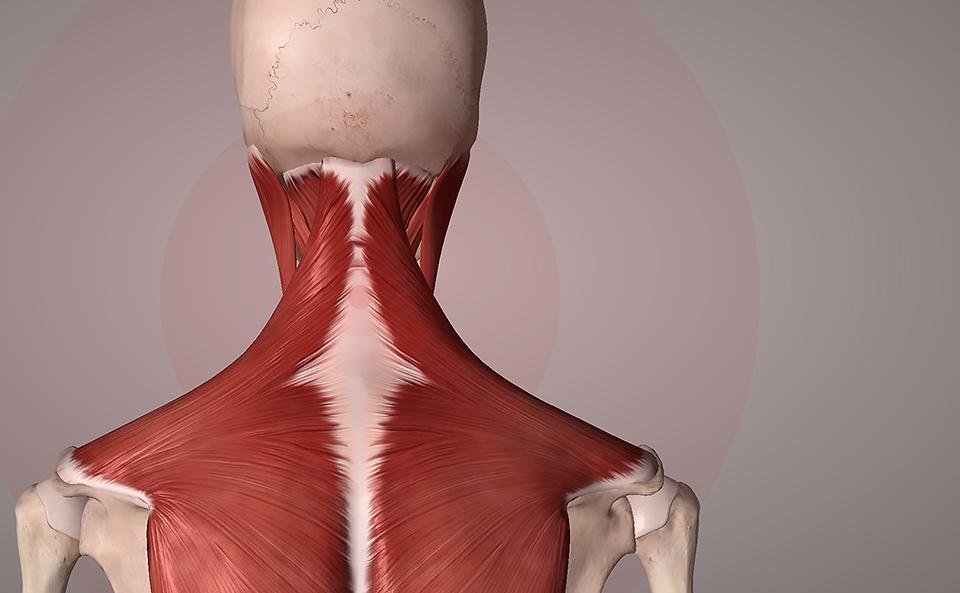 首の筋肉が硬くなる原因