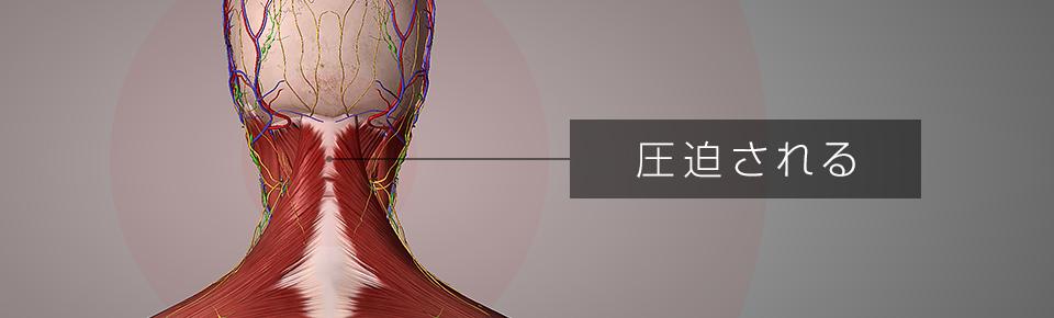 首から頭にかけて通っている血管・リンパ管・神経が圧迫される