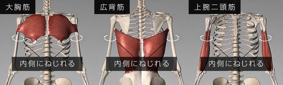 大胸筋広背筋上腕二頭筋が硬くなると巻き肩の原因になる