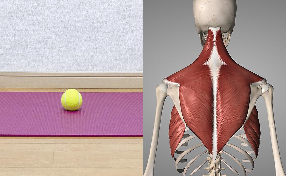 テニスボールで肩甲骨をマッサージするとは?