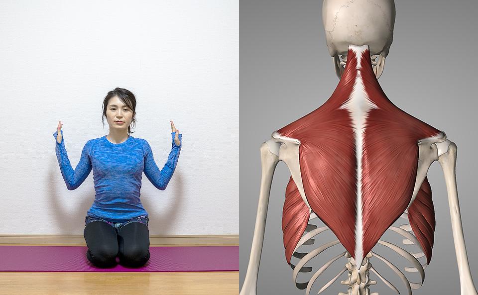 肩甲骨の体操を行う前に知っておきたいこと