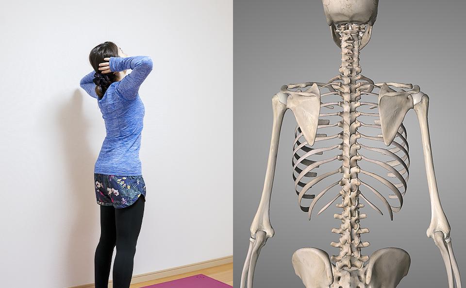 肩甲骨 体操とは?