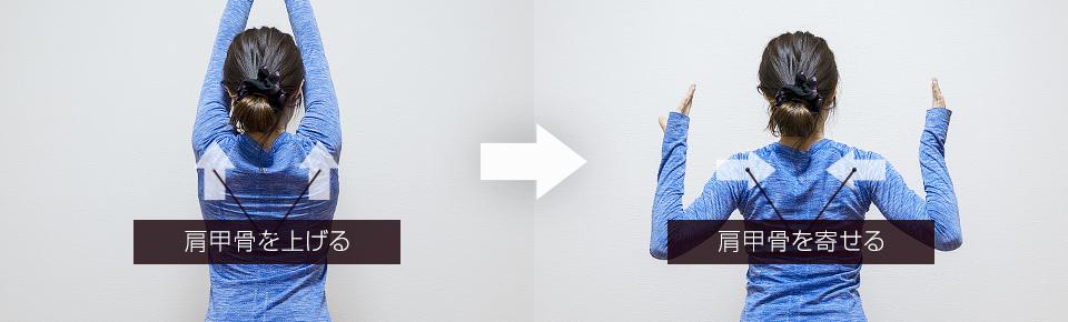 肩甲骨回しの肩甲骨の動き