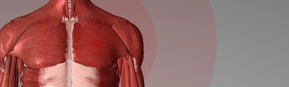 立ったまま「胸」のストレッチ