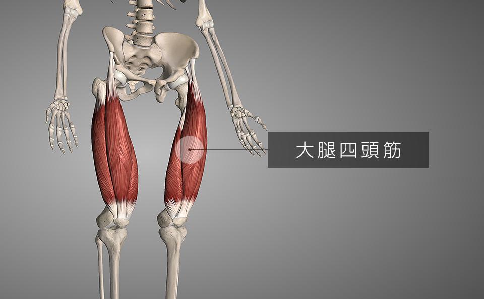 前腿 = 大腿四頭筋
