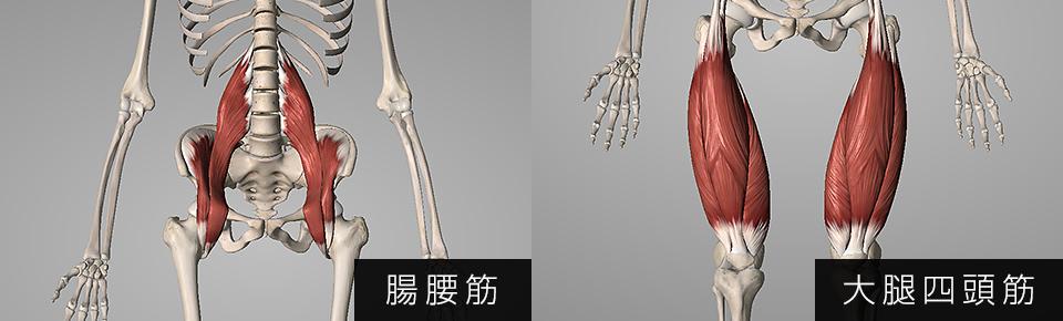 腸腰筋・大腿四頭筋
