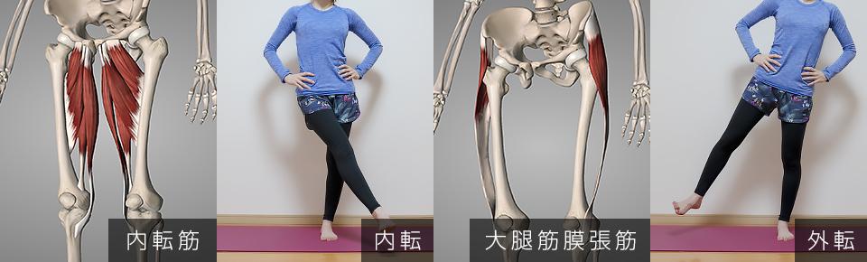 内転筋 → 脚を内側に閉じる・外転筋 → 脚を外側に開く