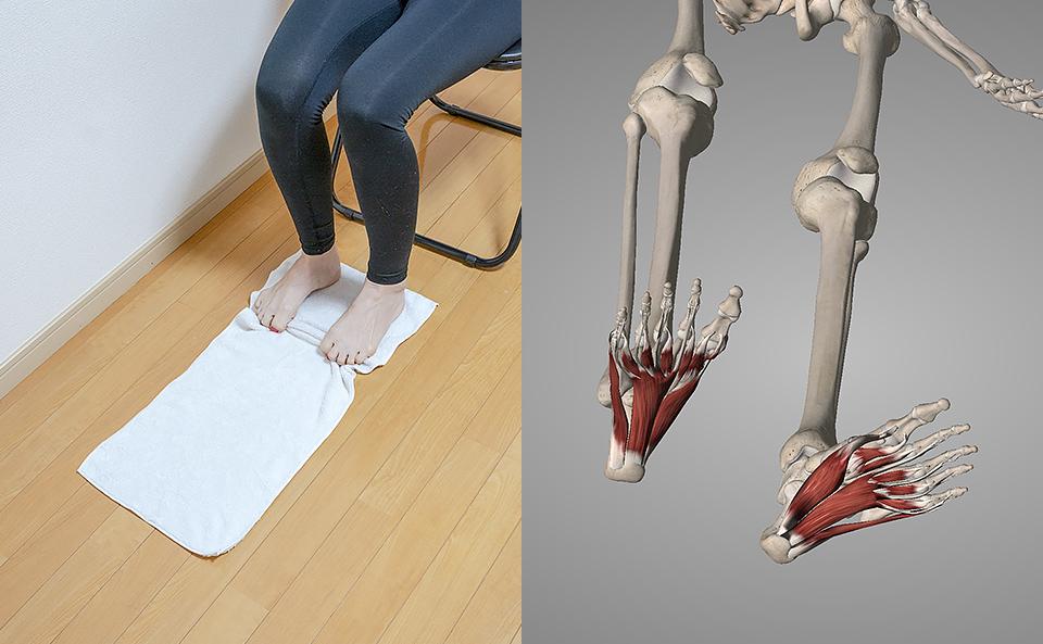 足指・足裏のトレーニング効果