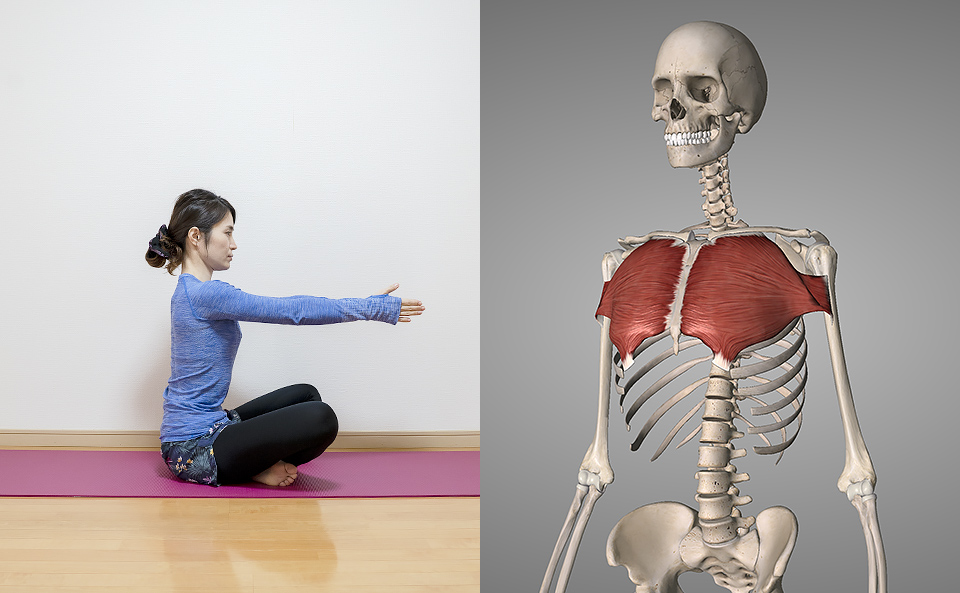 胸筋のトレーニング効果
