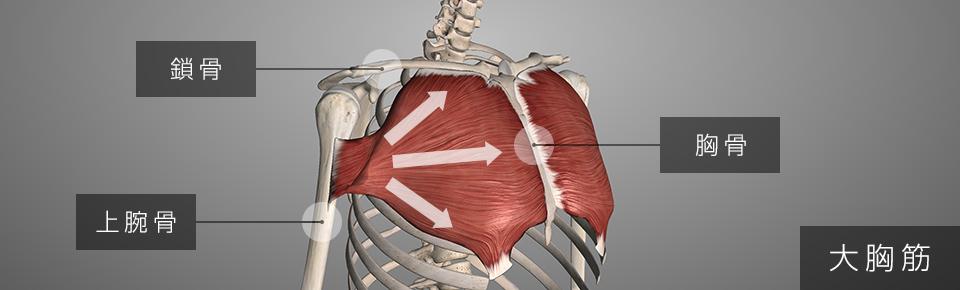 大胸筋「上部・中部・下部」