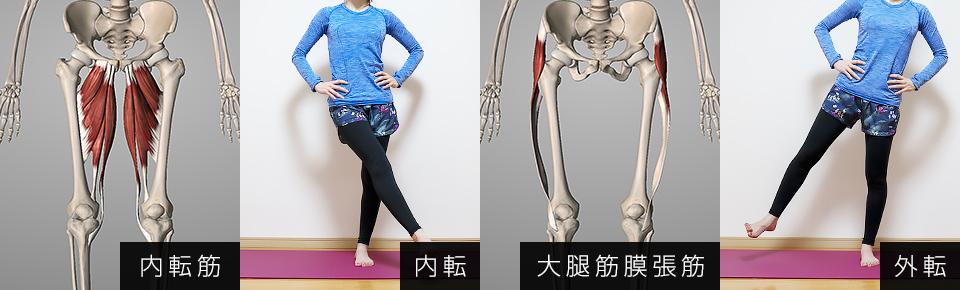 内転筋 → 脚を内側に閉じる・外転筋 → 脚を外側に開