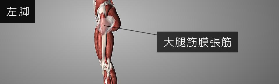 大腿筋膜張筋周辺