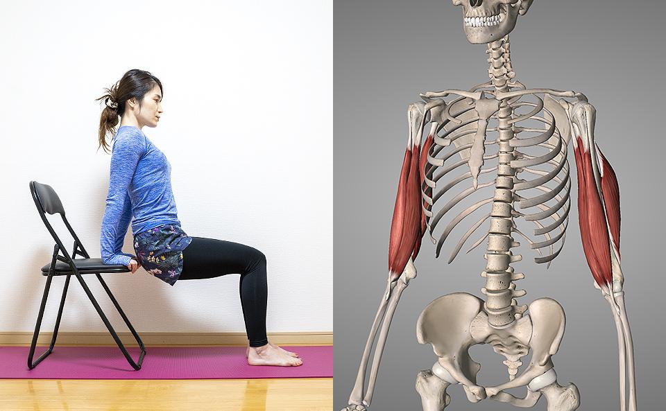 二の腕を太くする・メリハリを作る筋トレ方法の紹介
