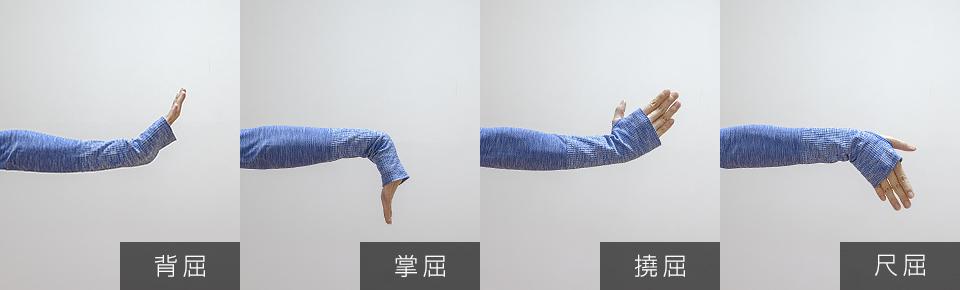 手首の4つの動き「掌屈・背屈・撓屈・尺屈」