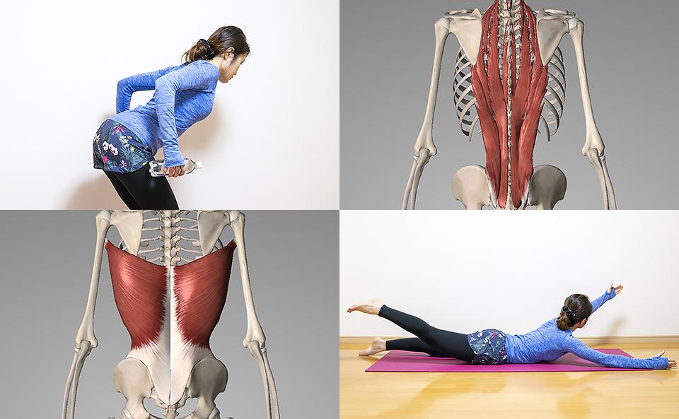 背中を鍛える筋トレ方法の紹介