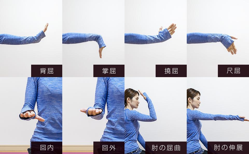 手首の4つの動き「掌屈・背屈・撓屈・尺屈」前腕の2つの動き「回外・回内・肘の屈曲・肘の伸展」