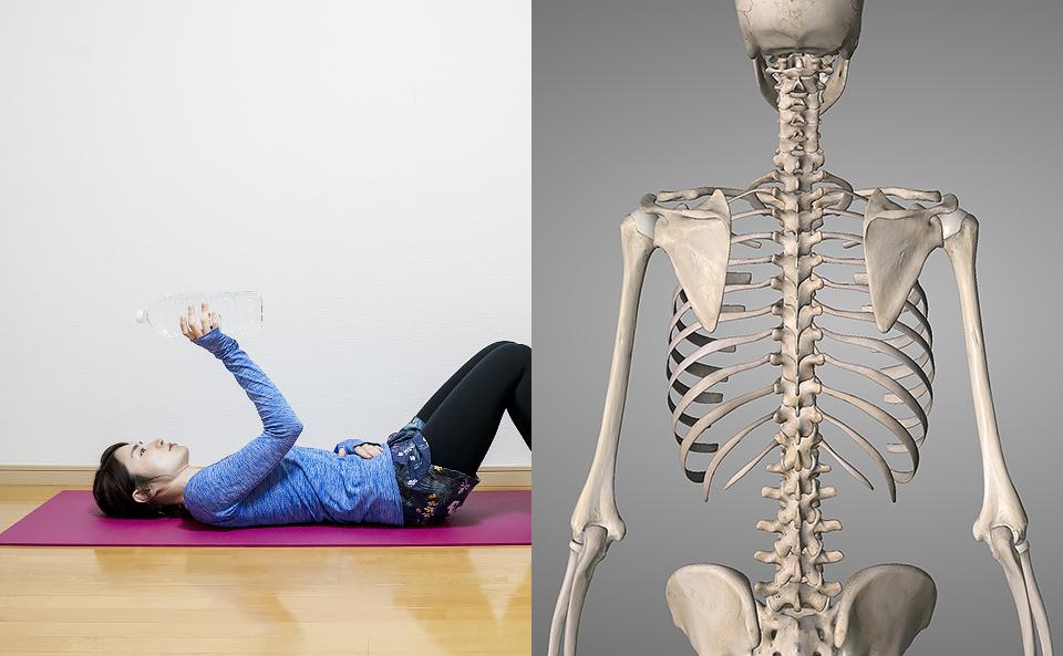 肩甲骨の筋トレ方法を6種目紹介