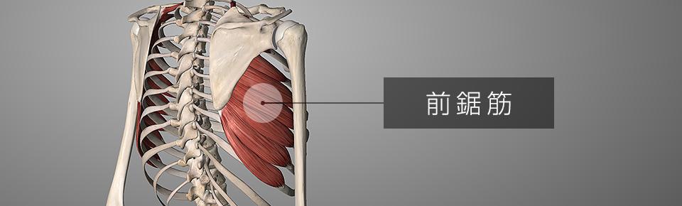 前鋸筋の筋トレ方法を2種目紹介