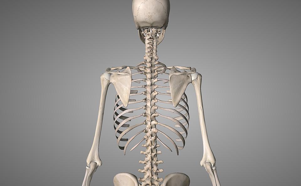 肩甲骨周りの筋トレとは?