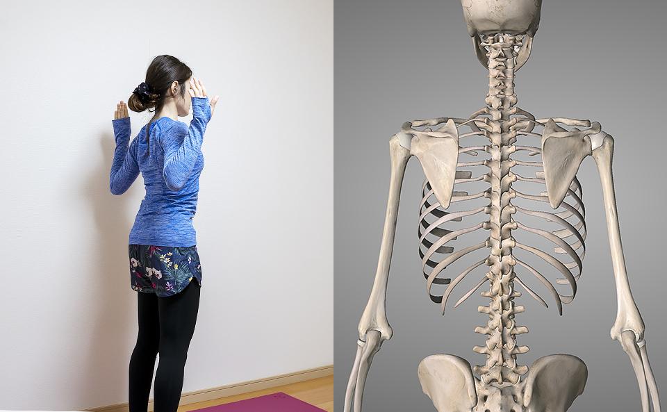 肩甲骨の筋トレ前の準備運動