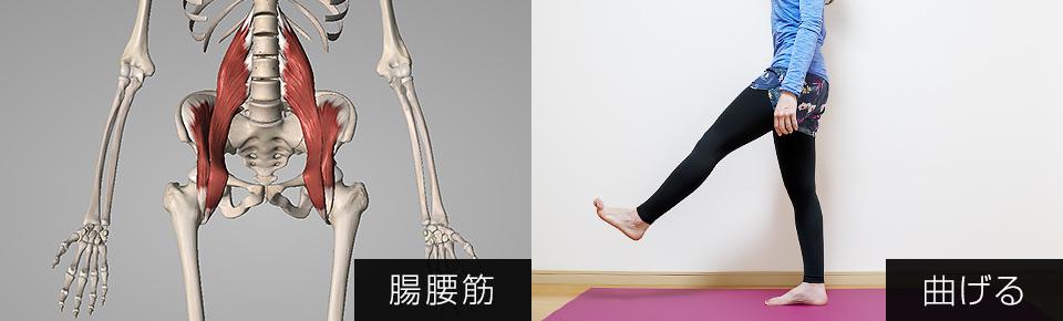 腸腰筋は歩行時において太ももを持ち上げる働きを持っている