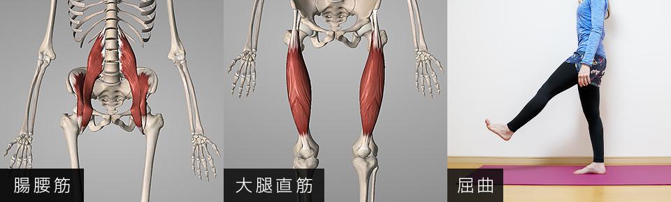 腸腰筋と大腿直筋は股関節を曲げる働きを持っている