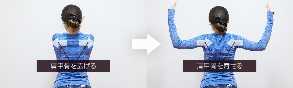 バタフライの肩甲骨の動き