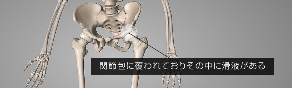 股関節を動かすと滑液が分泌される