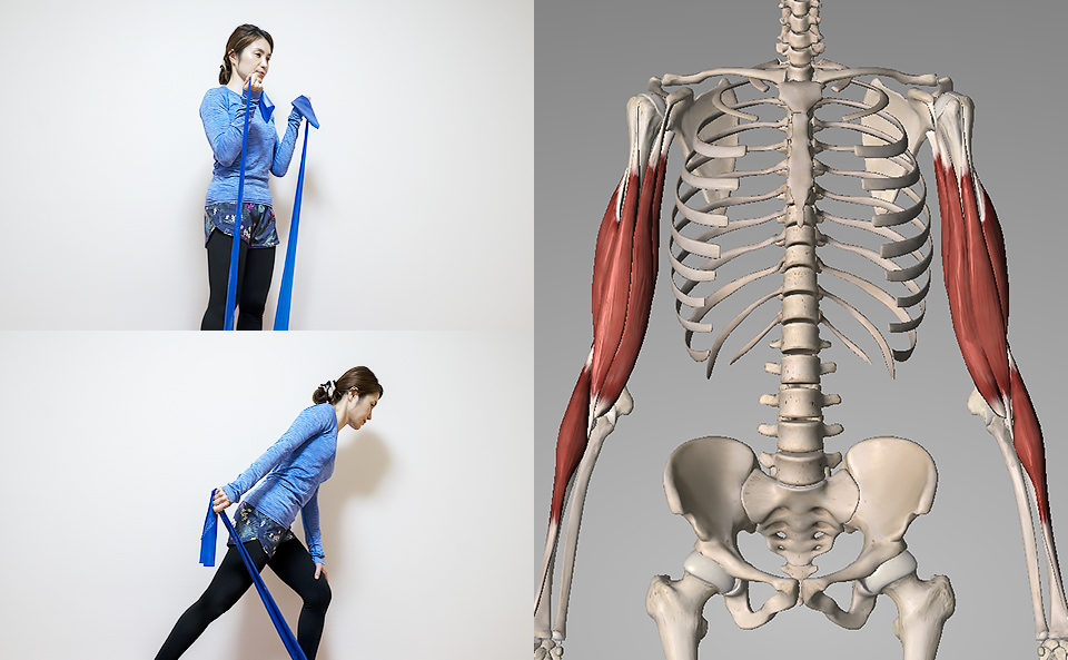 トレーニングチューブで「腕を鍛える」使い方を7種目紹介