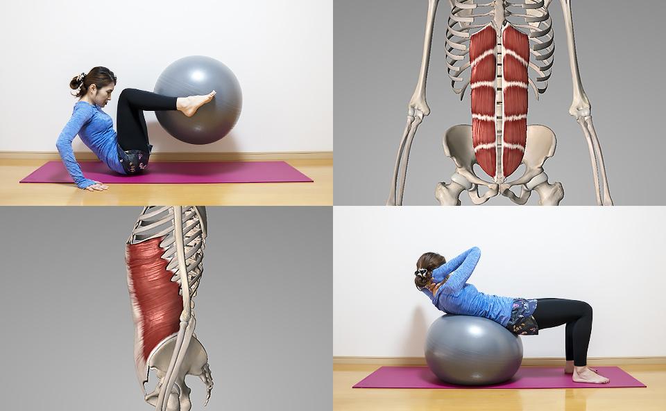 バランスボールで腹筋の筋トレ方法を9種目紹介