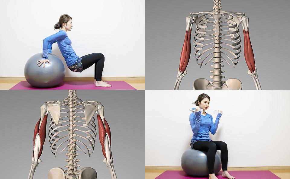 バランスボールで腕の筋トレ方法を6種目紹介