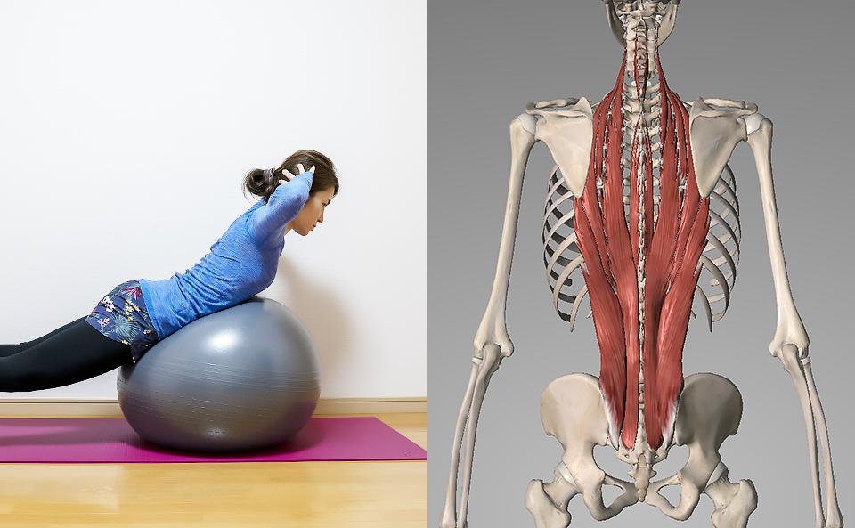 バランスボールで背筋の筋トレ方法を2種目紹介