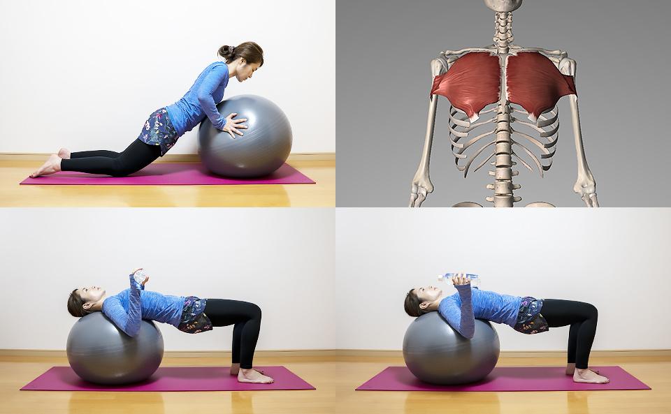 バランスボールで胸筋の筋トレ方法を4種目紹介