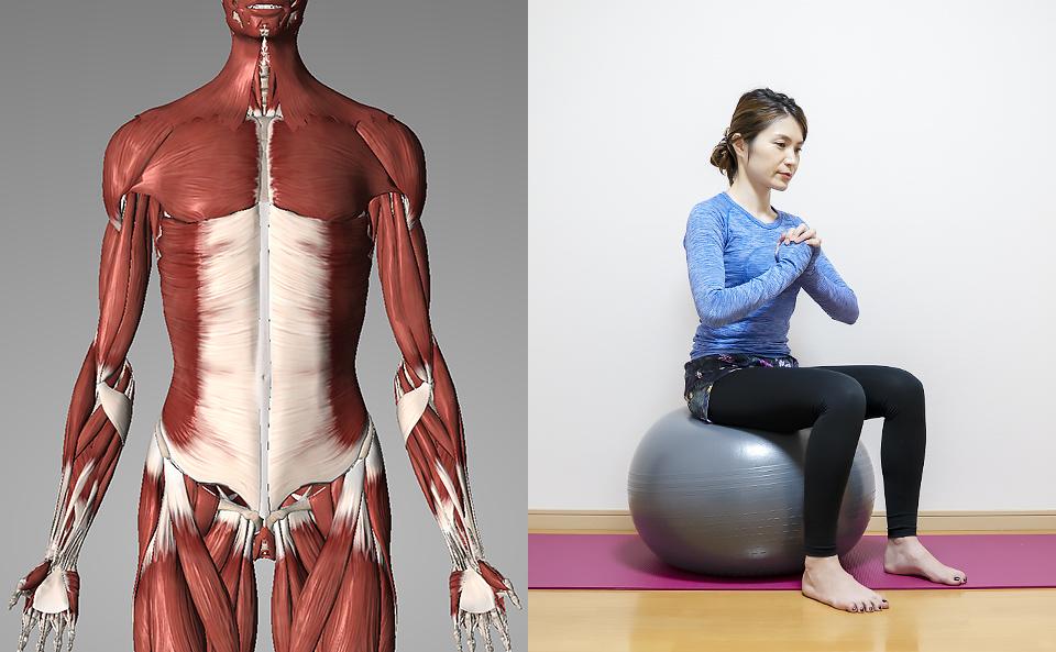 バランスボールで体幹トレーニングを始める前の基礎知識